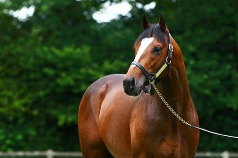 Wertheimer & Frère achète un foal d'Intello 130 000gns