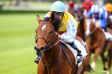 First mares in foal for Recoletos