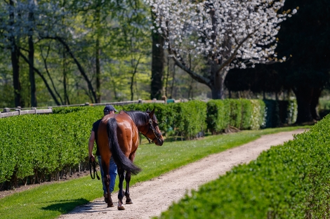 2021 Stallion Fees: The Quality For An Affordable Price!