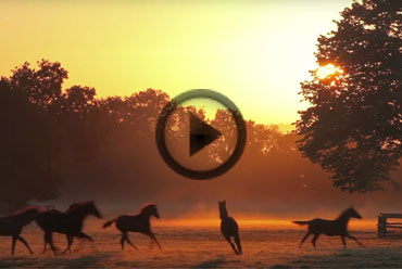 Haras du Quesnay as you've never seen it before !