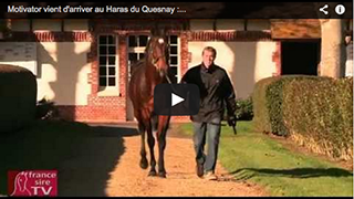 Motivator vient d'arriver au Haras du Quesnay : itw avec Vincent Rimaud